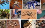 К чему снится тарантул: обратимся за помощью к сонникам