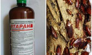 Препараты от шашеля: проверенные народные средства и промышленные растворы