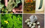 Как бороться с тлей на огурцах – простые народные рецепты и профессиональные препараты