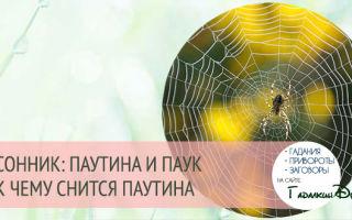 К чему нам снится паутина