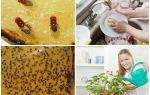 Винные мошки: откуда берутся в доме и как быстро избавиться от них