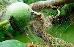Деревья в паутине: как помочь садовым растениям