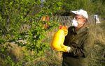 Борьба с плодожоркой: как уберечь урожай от вредителя при помощи химических и народных средств