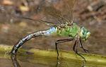 Приснился майский жук – сонник подскажет ответ