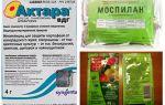 Выбираем средство от белокрылки для тепличных и комнатных растений
