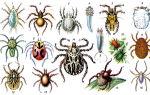Как выглядит клещ : описание распространенных видов